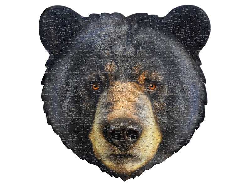 I AM - Bear (merk Madd Cap), 550st, 10+